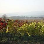 Weine aus dem Mittelburgenland