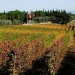 Bindella – Weinverkostung
