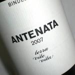 Antenata 2007