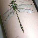 Sauvignon 'Grüne Libelle' 2010