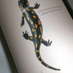 Chardonnay 'Salamander' 2010