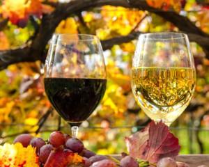 Wein geniessen im Weinberg